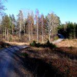 Grusväg och backe mot Strandbo